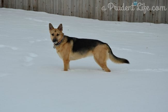 Maddie in the Snow