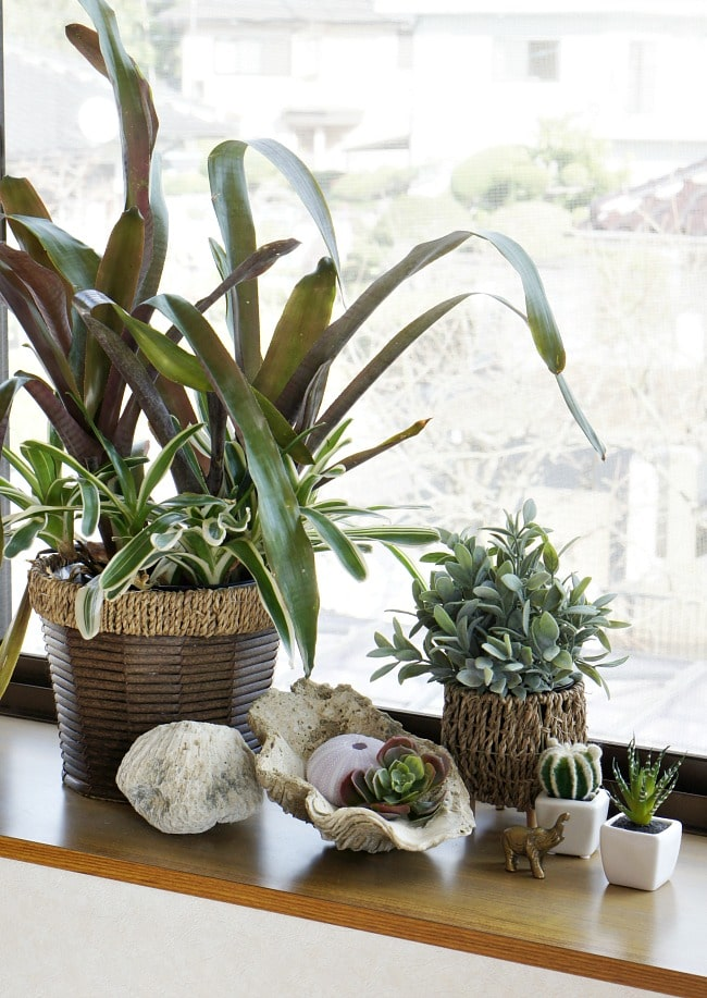 add plants to make your rental look more permanent