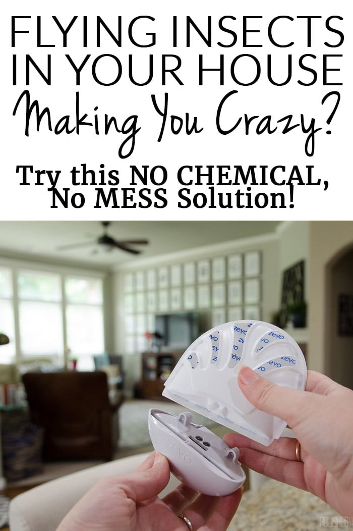 Flies & Gnats Inside Your House Making you CRAZY? Get rid of indoor flying insects with this simple & affordable solution!