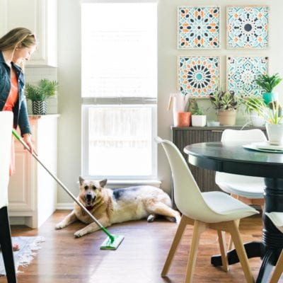 Keeping a Clean House When You Have a Shedding Dog