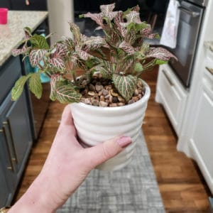 Indoor plant in a white ceramic pot