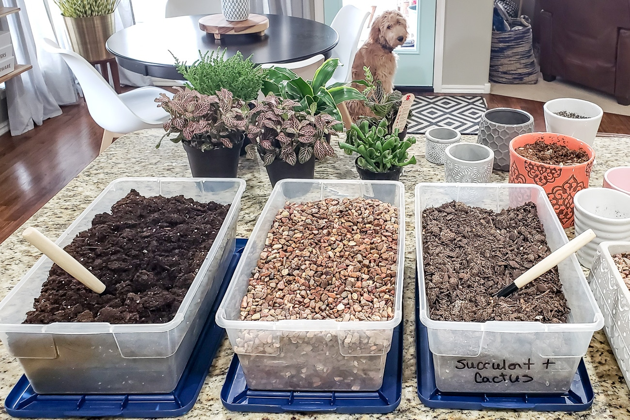 Potting soil and pebbles in plastic containers on kitchen counter - tips for keeping plants alive