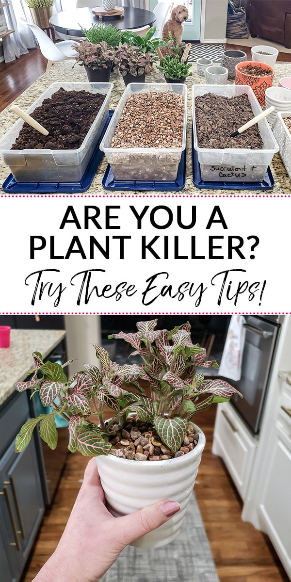 Are you a plant killer? Try these Easy Tips for Decorating with Plants! (Text over image of soil and plants)