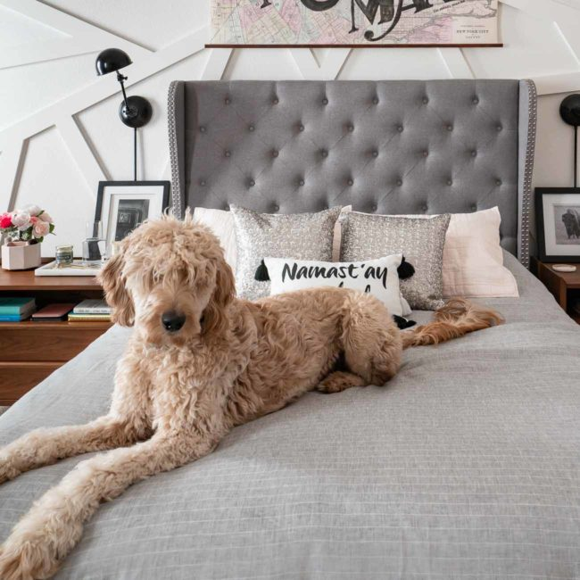 goldendoodle on grey bed