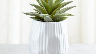 Potted Faux Single Succulent Plant