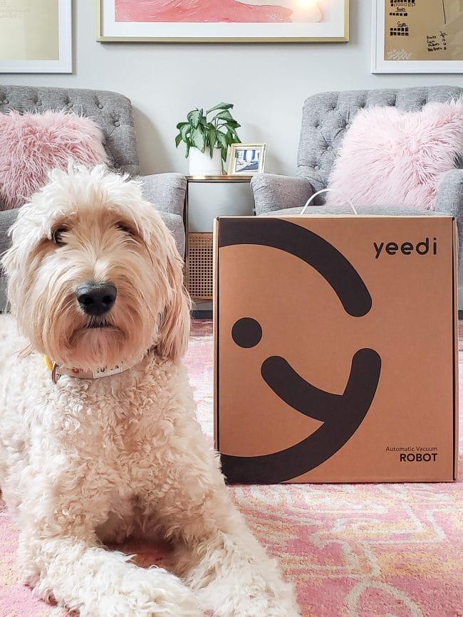 golden doodle dog next to unopened cardboard box labeled yeedi